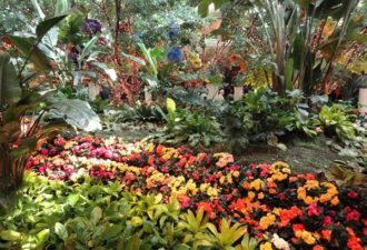 Сад в интерьере