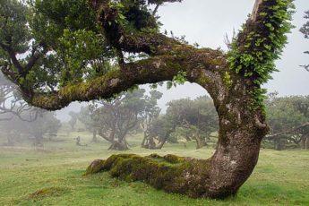Лавровый лес